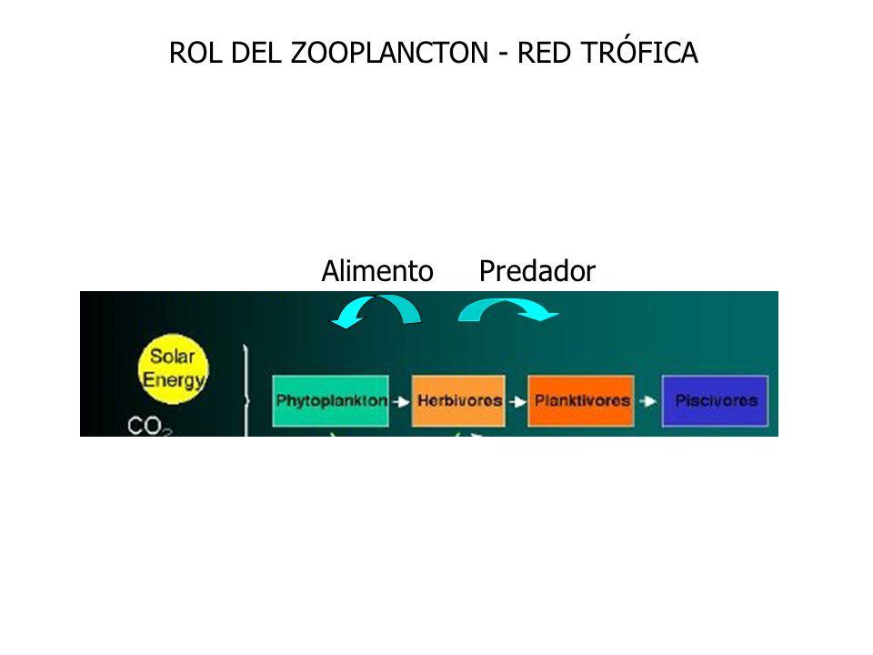Alimento Predador ROL DEL ZOOPLANCTON - RED TRÓFICA
