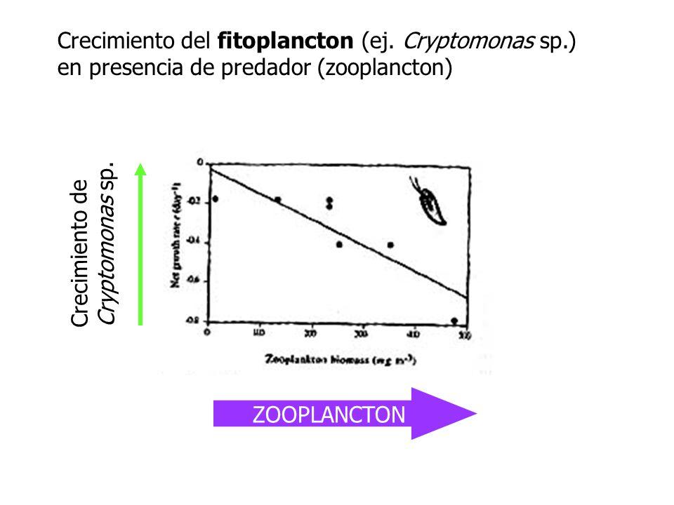 Crecimiento del fitoplancton (ej. Cryptomonas sp.) en presencia de predador (zooplancton) ZOOPLANCTON Crecimiento de Cryptomonas sp.