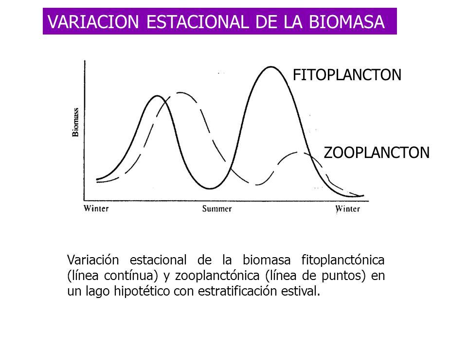 Variación estacional de la biomasa fitoplanctónica (línea contínua) y zooplanctónica (línea de puntos) en un lago hipotético con estratificación estiv