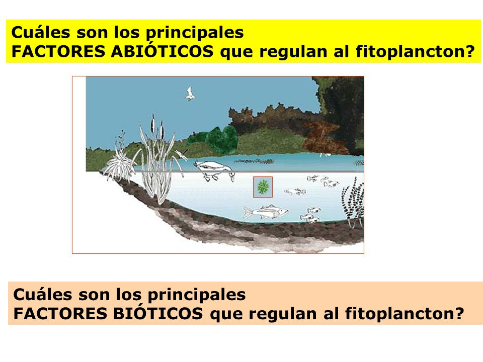 Cuáles son los principales FACTORES ABIÓTICOS que regulan al fitoplancton? Cuáles son los principales FACTORES BIÓTICOS que regulan al fitoplancton?