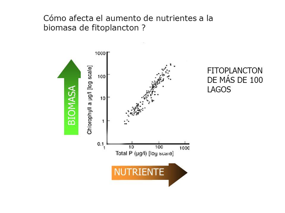 BIOMASA NUTRIENTE FITOPLANCTON DE MÁS DE 100 LAGOS Cómo afecta el aumento de nutrientes a la biomasa de fitoplancton ?