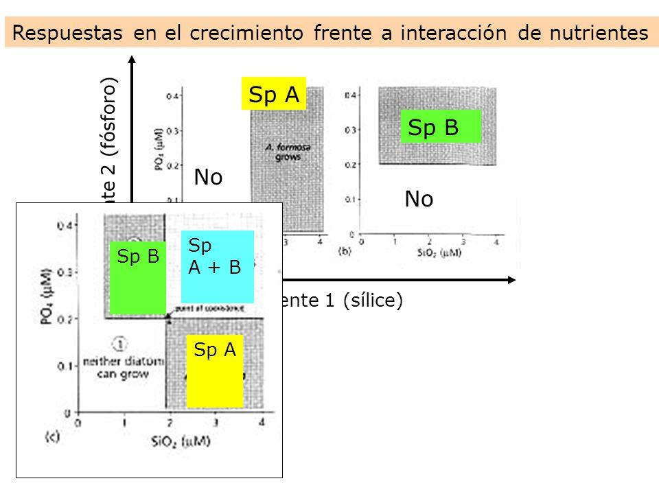 Nutriente 1 (sílice) Nutriente 2 (fósforo) Respuestas en el crecimiento frente a interacción de nutrientes No Sp A Sp B Sp A Sp B Sp A + B