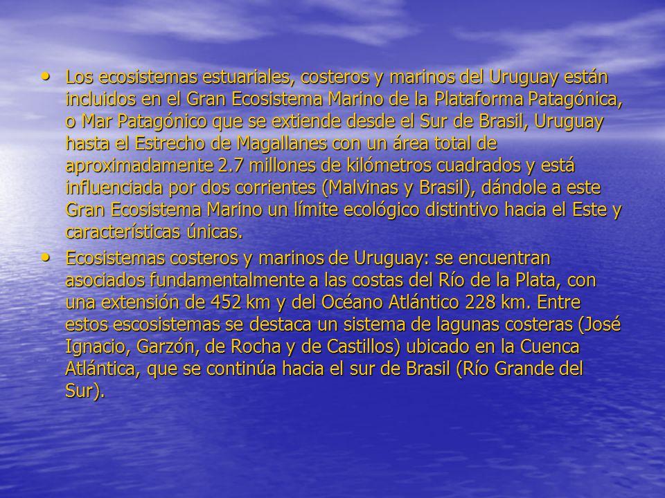 Los ecosistemas estuariales, costeros y marinos del Uruguay están incluidos en el Gran Ecosistema Marino de la Plataforma Patagónica, o Mar Patagónico