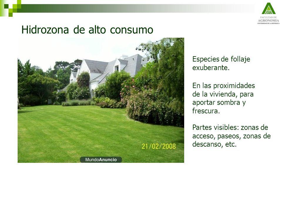 Hidrozona de alto consumo En las proximidades de la vivienda, para aportar sombra y frescura. Partes visibles: zonas de acceso, paseos, zonas de desca