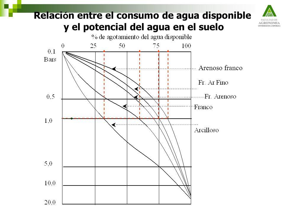 Relaci ó n entre el consumo de agua disponible y el potencial del agua en el suelo Arenoso franco
