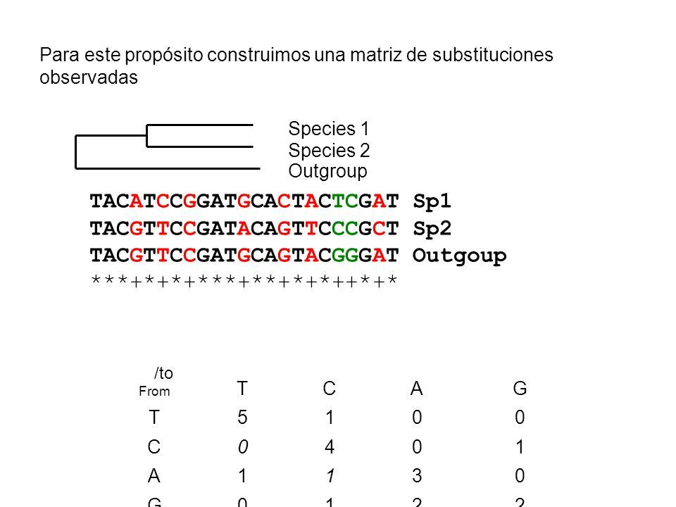 Para este propósito construimos una matriz de substituciones observadas TACATCCGGATGCACTACTCGAT Sp1 TACGTTCCGATACAGTTCCCGCT Sp2 TACGTTCCGATGCAGTACGGGA