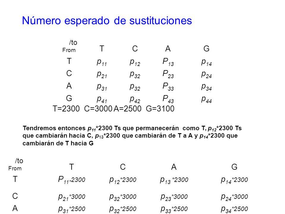 T=2300 C=3000 A=2500 G=3100 Número esperado de sustituciones /to From TCAG Tp 11 p 12 P 13 p 14 Cp 21 p 32 P 23 p 24 Ap 31 p 32 P 33 p 34 Gp 41 p 42 P