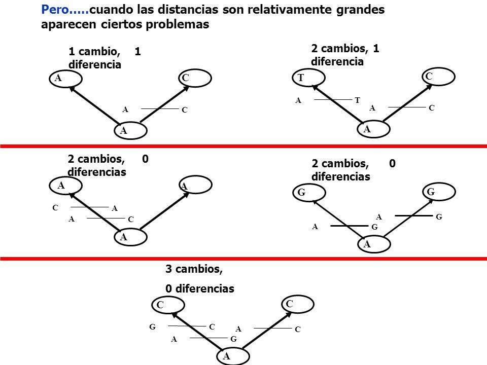 Pero…..cuando las distancias son relativamente grandes aparecen ciertos problemas A T A C C T A A CA A C 1 cambio, 1 diferencia 2 cambios, 1 diferenci