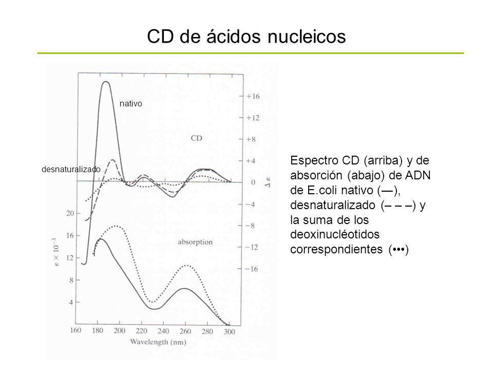 CD de ácidos nucleicos Espectro CD (arriba) y de absorción (abajo) de ADN de E.coli nativo (), desnaturalizado (– – –) y la suma de los deoxinucléotid