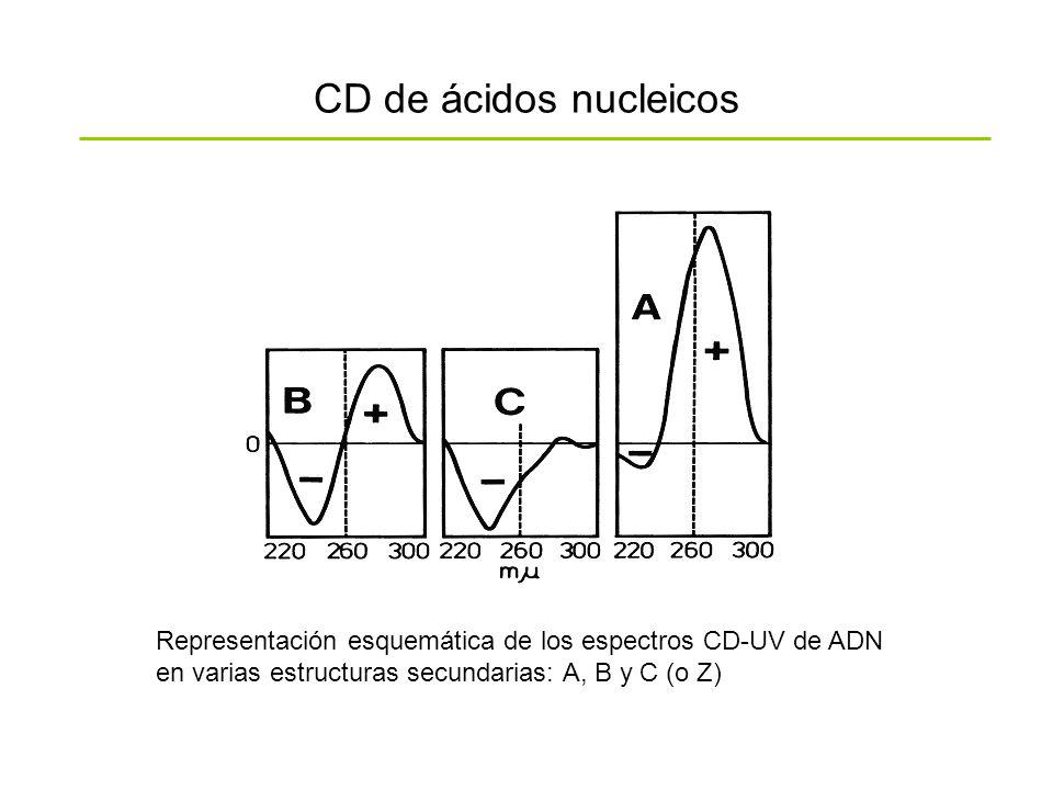 CD de ácidos nucleicos Representación esquemática de los espectros CD-UV de ADN en varias estructuras secundarias: A, B y C (o Z)