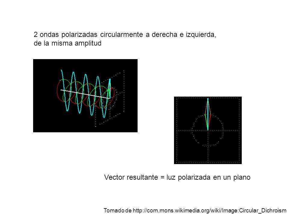 2 ondas polarizadas circularmente a derecha e izquierda, de la misma amplitud Vector resultante = luz polarizada en un plano Tomado de http://com,mons.wikimedia.org/wiki/Image:Circular_Dichroism
