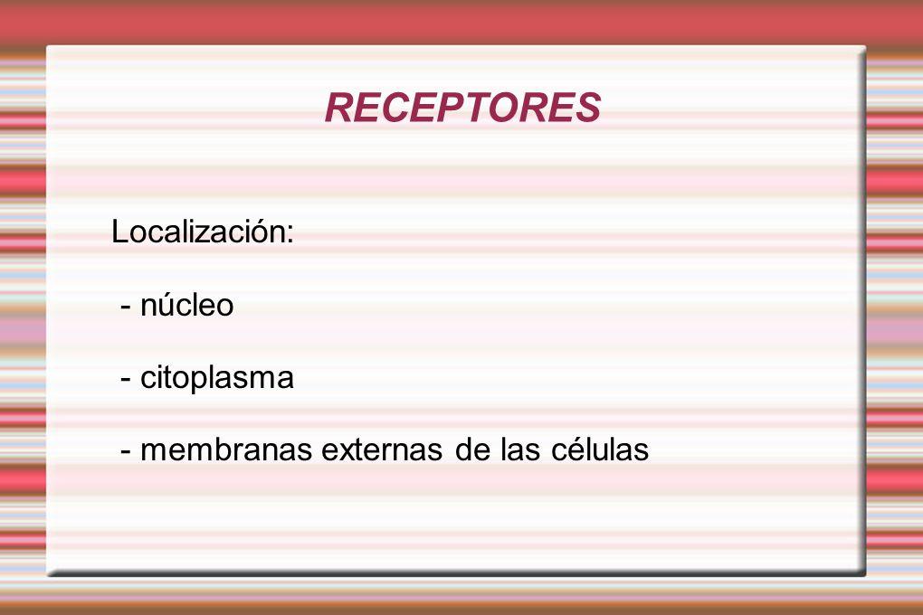RECEPTORES Localización: - núcleo - citoplasma - membranas externas de las células