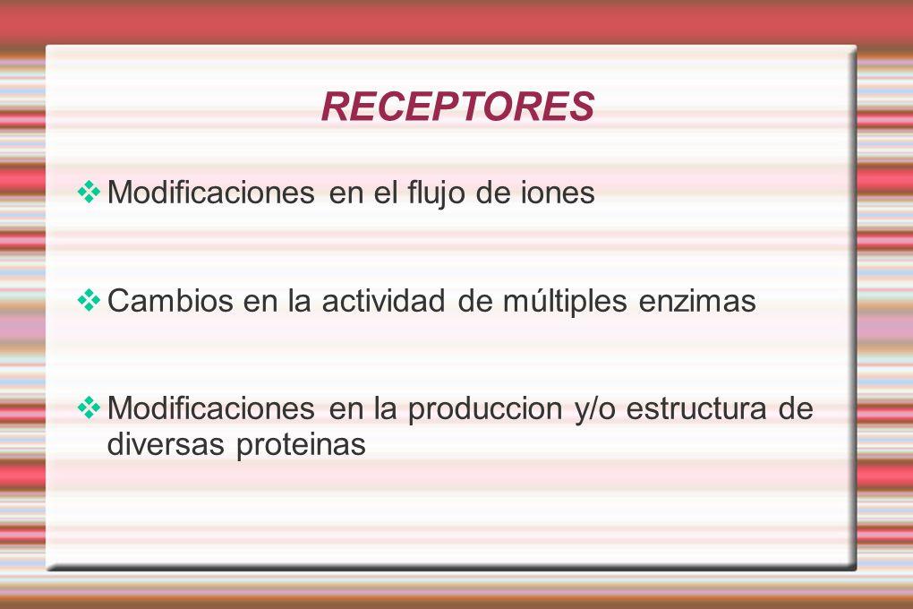 RECEPTORES Modificaciones en el flujo de iones Cambios en la actividad de múltiples enzimas Modificaciones en la produccion y/o estructura de diversas