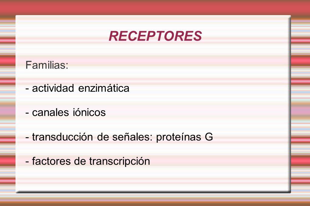RECEPTORES Familias: - actividad enzimática - canales iónicos - transducción de señales: proteínas G - factores de transcripción