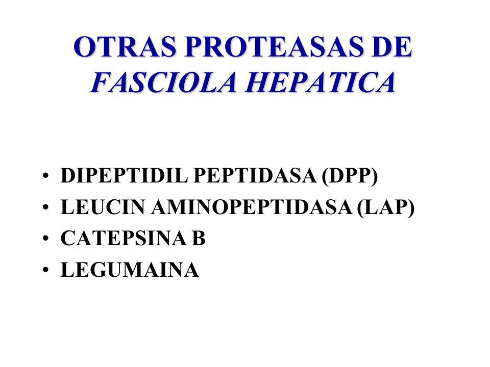 OTRAS PROTEASAS DE FASCIOLA HEPATICA DIPEPTIDIL PEPTIDASA (DPP) LEUCIN AMINOPEPTIDASA (LAP) CATEPSINA B LEGUMAINA