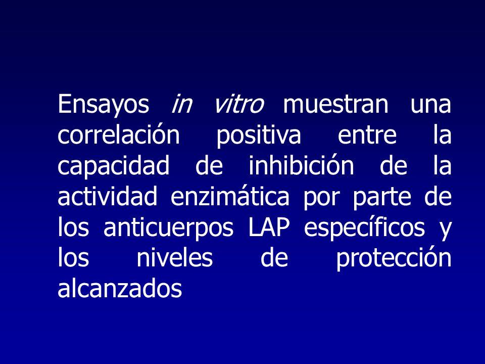 Ensayos in vitro muestran una correlación positiva entre la capacidad de inhibición de la actividad enzimática por parte de los anticuerpos LAP específicos y los niveles de protección alcanzados