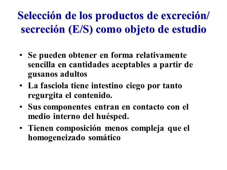 Selección de los productos de excreción/ secreción (E/S) como objeto de estudio Se pueden obtener en forma relativamente sencilla en cantidades aceptables a partir de gusanos adultos La fasciola tiene intestino ciego por tanto regurgita el contenido.
