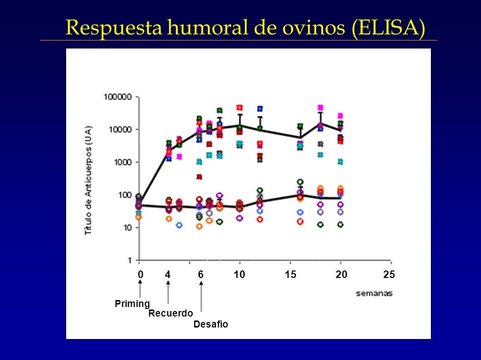 Respuesta humoral de ovinos (ELISA) 4 Priming 0 4 6 10 15 20 25 Recuerdo Desafio