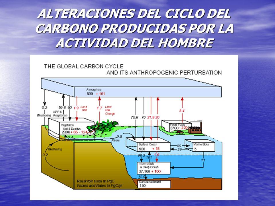 ALTERACIONES DEL CICLO DEL CARBONO PRODUCIDAS POR LA ACTIVIDAD DEL HOMBRE