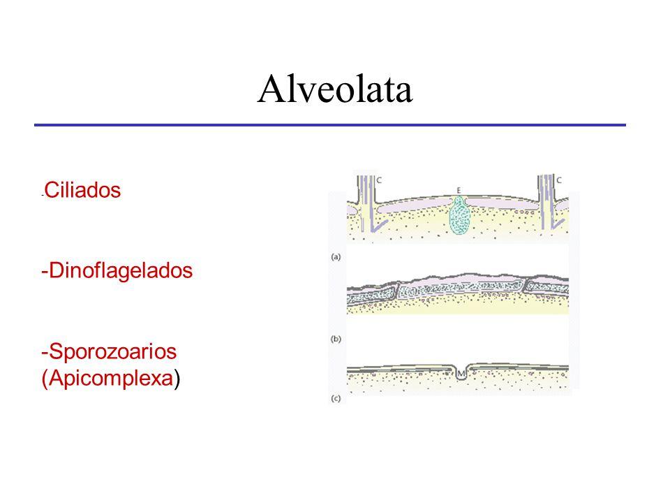 Alveolata - Ciliados -Dinoflagelados -Sporozoarios (Apicomplexa)