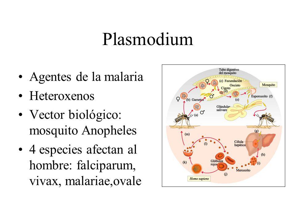 Plasmodium Agentes de la malaria Heteroxenos Vector biológico: mosquito Anopheles 4 especies afectan al hombre: falciparum, vivax, malariae,ovale
