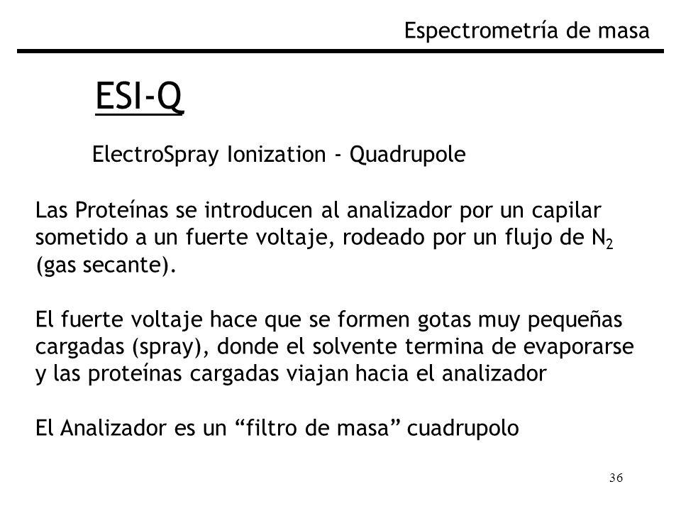 36 ESI-Q Espectrometría de masa ElectroSpray Ionization - Quadrupole Las Proteínas se introducen al analizador por un capilar sometido a un fuerte voltaje, rodeado por un flujo de N 2 (gas secante).