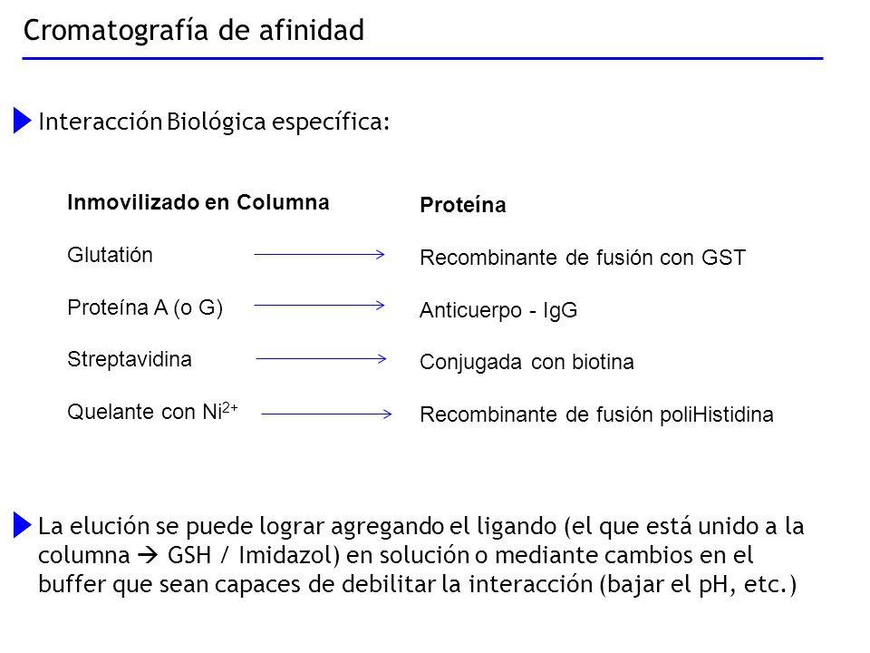 Cromatografía de afinidad Interacción Biológica específica: La elución se puede lograr agregando el ligando (el que está unido a la columna GSH / Imid