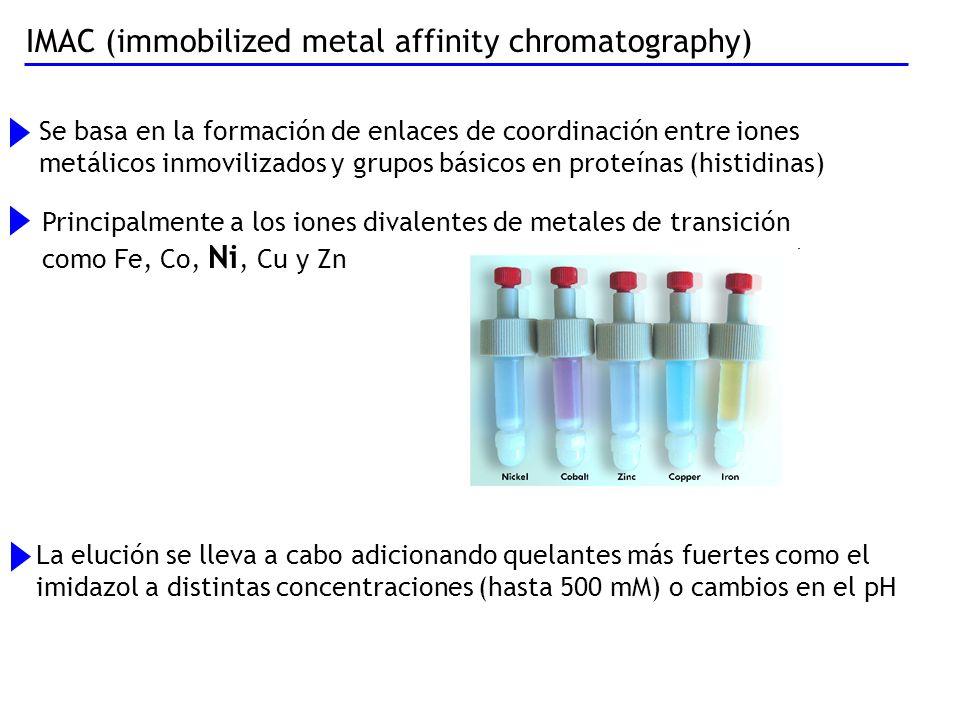 IMAC (immobilized metal affinity chromatography) Se basa en la formación de enlaces de coordinación entre iones metálicos inmovilizados y grupos básic