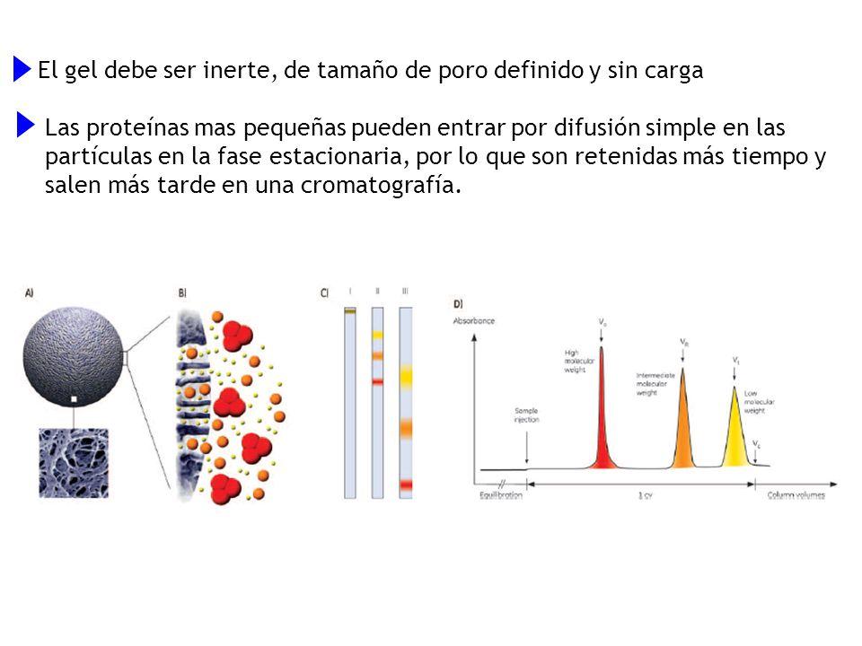 El gel debe ser inerte, de tamaño de poro definido y sin carga Las proteínas mas pequeñas pueden entrar por difusión simple en las partículas en la fa