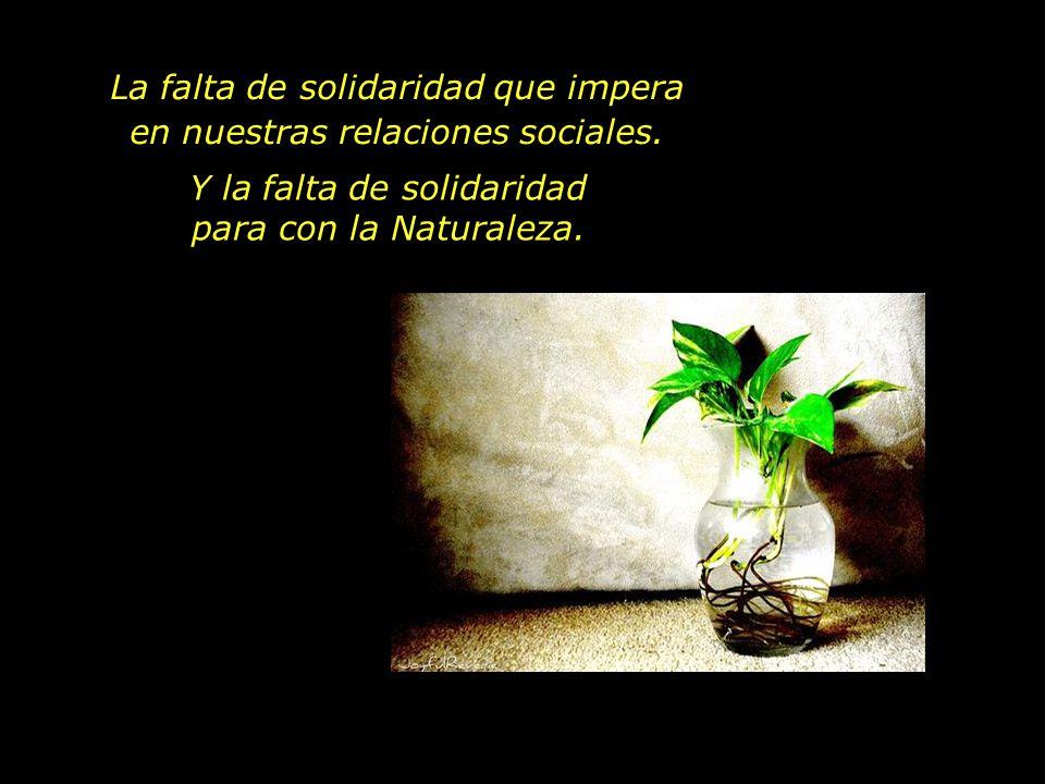 La falta de solidaridad que impera en nuestras relaciones sociales. Y la falta de solidaridad para con la Naturaleza.