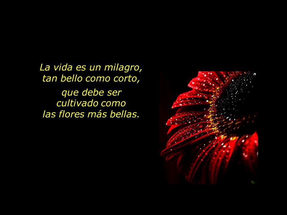 La vida es un milagro, tan bello como corto, que debe ser cultivado como las flores más bellas.
