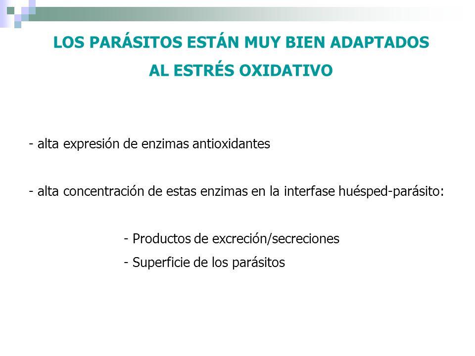 LOS PARÁSITOS ESTÁN MUY BIEN ADAPTADOS AL ESTRÉS OXIDATIVO - alta expresión de enzimas antioxidantes - alta concentración de estas enzimas en la inter