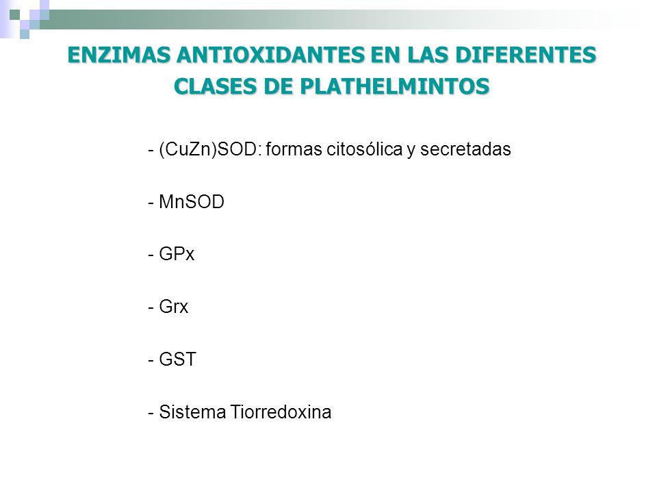 - (CuZn)SOD: formas citosólica y secretadas - MnSOD - GPx - Grx - GST - Sistema Tiorredoxina ENZIMAS ANTIOXIDANTES EN LAS DIFERENTES CLASES DE PLATHEL