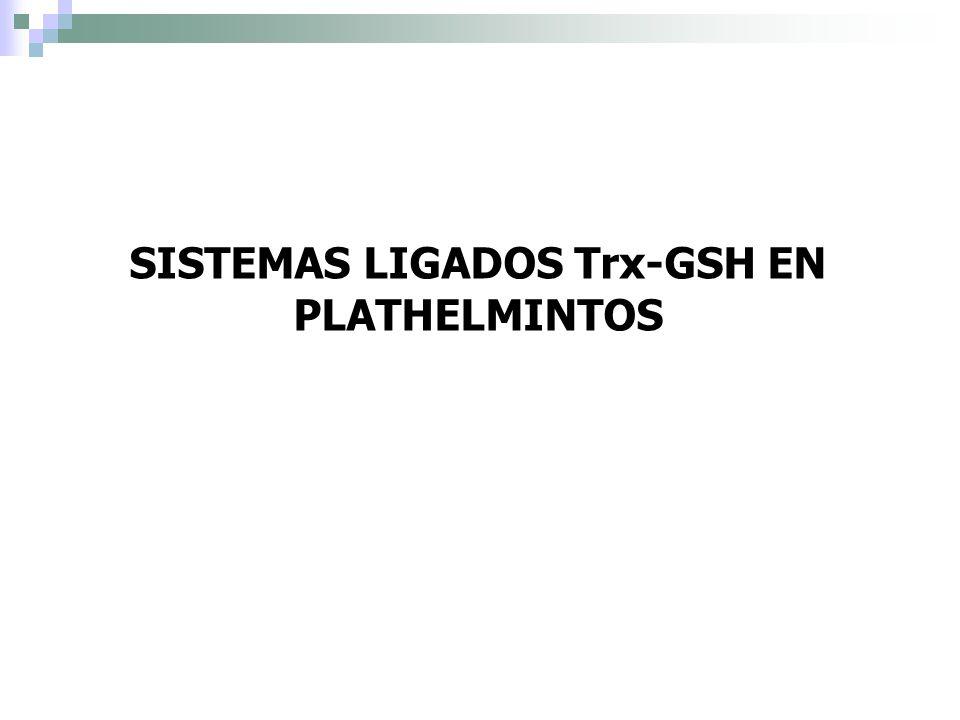 SISTEMAS LIGADOS Trx-GSH EN PLATHELMINTOS
