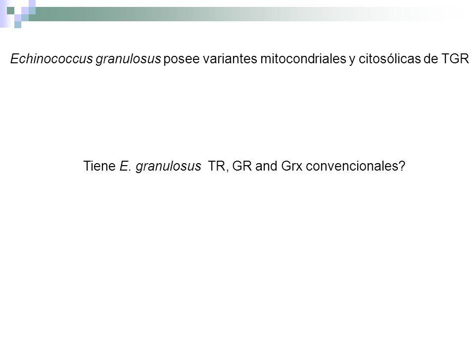 Echinococcus granulosus posee variantes mitocondriales y citosólicas de TGR Tiene E. granulosus TR, GR and Grx convencionales?