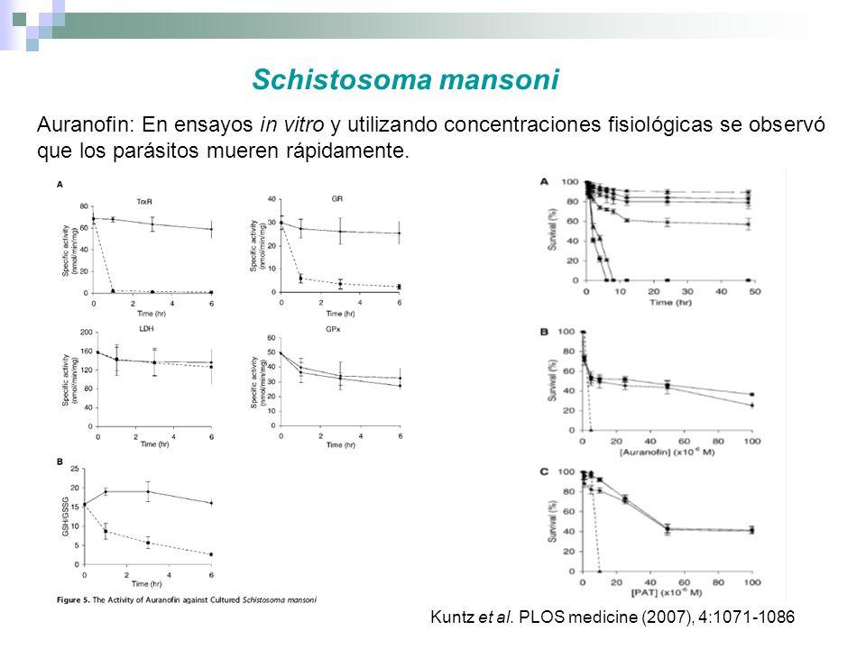 Schistosoma mansoni Auranofin: En ensayos in vitro y utilizando concentraciones fisiológicas se observó que los parásitos mueren rápidamente. Kuntz et