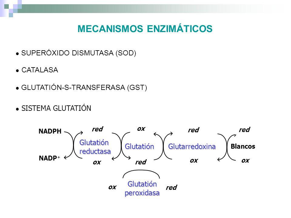 MECANISMOS ENZIMÁTICOS SISTEMA TIORREDOXINA NADPH NADP + Tiorredoxina reductasa Tiorredoxina red ox red Tiorredoxina peroxidasa Blancos red ox