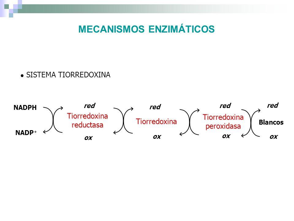 EN OTROS PLATHELMINTOS Taenia crassiceps: Seguimiento de una actividad GR y TR resultaron en la purificación de una TGR (Rendon et al.