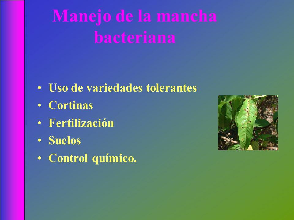 Manejo de la mancha bacteriana Uso de variedades tolerantes Cortinas Fertilización Suelos Control químico.