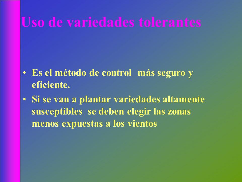 Uso de variedades tolerantes Es el método de control más seguro y eficiente. Si se van a plantar variedades altamente susceptibles se deben elegir las