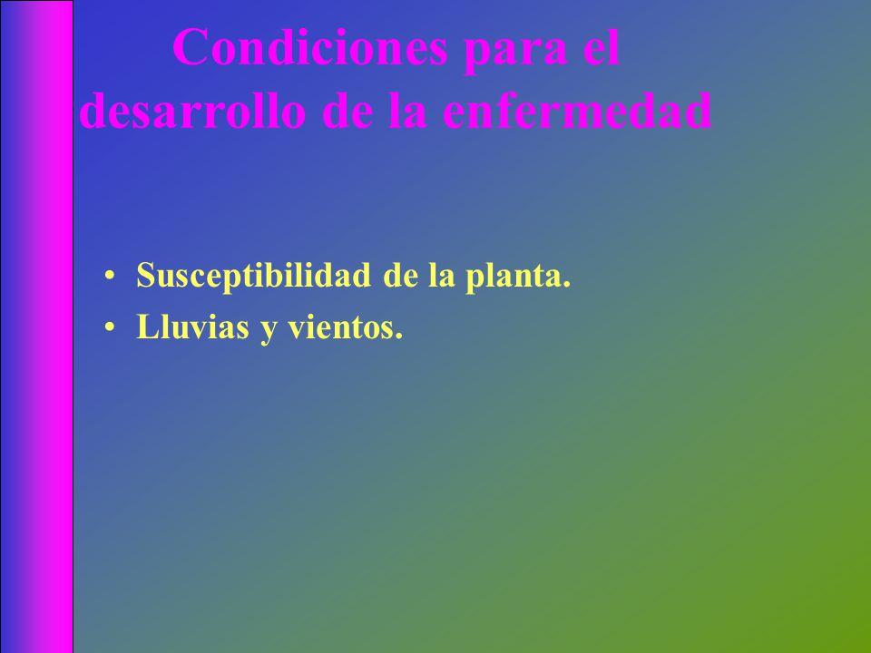 Condiciones para el desarrollo de la enfermedad Susceptibilidad de la planta. Lluvias y vientos.