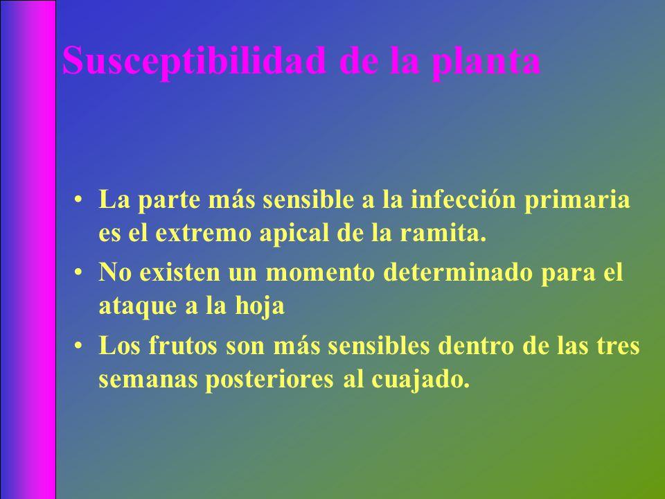 La parte más sensible a la infección primaria es el extremo apical de la ramita. No existen un momento determinado para el ataque a la hoja Los frutos