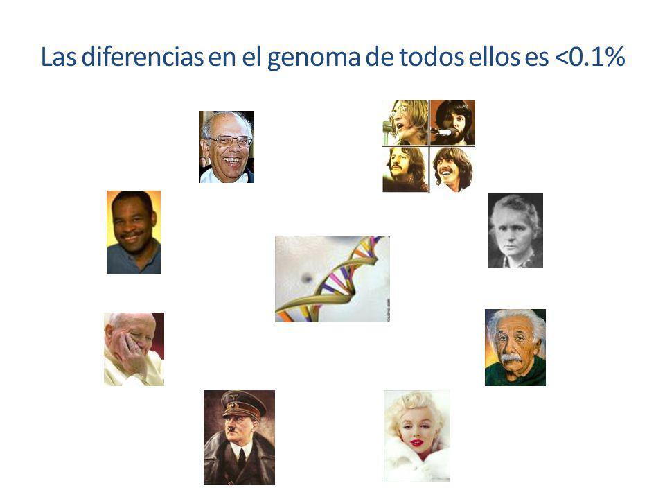 Las diferencias en el genoma de todos ellos es <0.1%