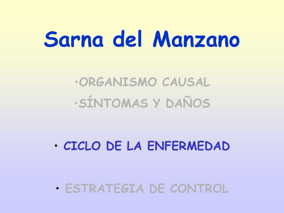 ORGANISMO CAUSAL SÍNTOMAS Y DAÑOS CICLO DE LA ENFERMEDAD ESTRATEGIA DE CONTROL Sarna del Manzano