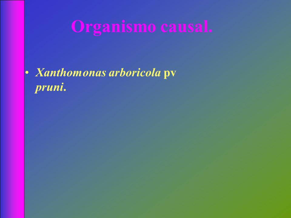 Organismo causal. Xanthomonas arboricola pv pruni.