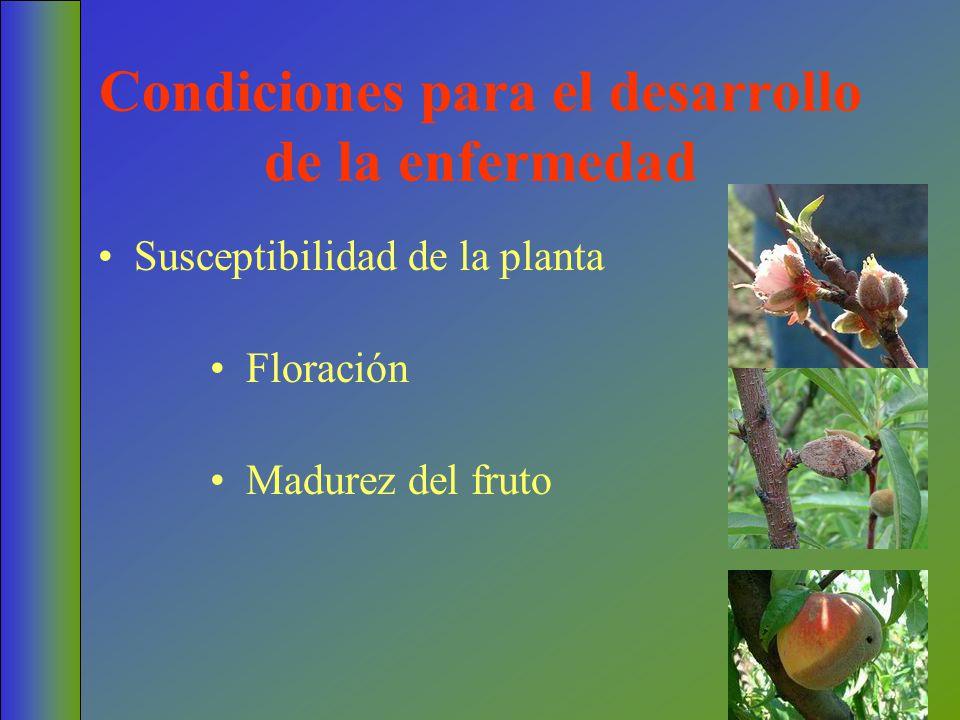 Condiciones para el desarrollo de la enfermedad Floración Susceptibilidad de la planta Madurez del fruto