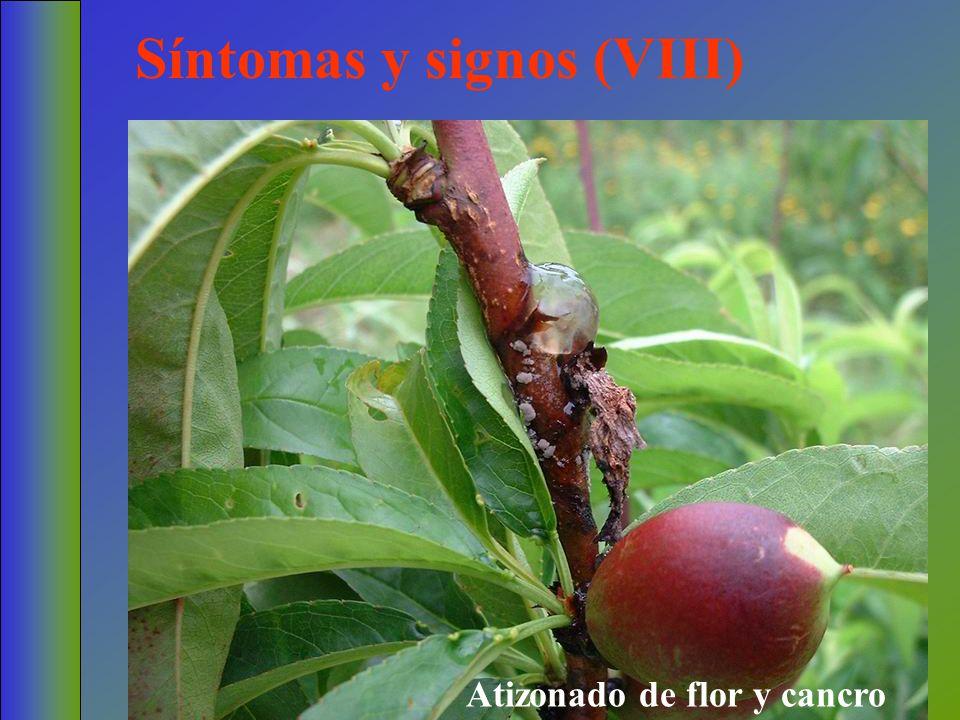 Síntomas y signos (VIII) Atizonado de flor y cancro