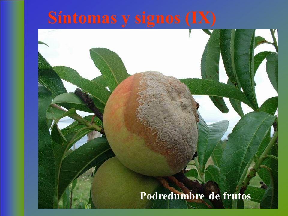 Síntomas y signos (IX) Podredumbre de frutos