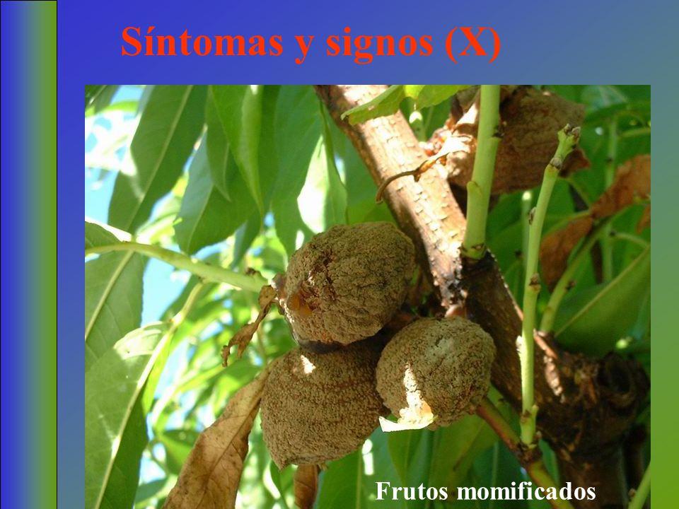 Síntomas y signos (X) Frutos momificados