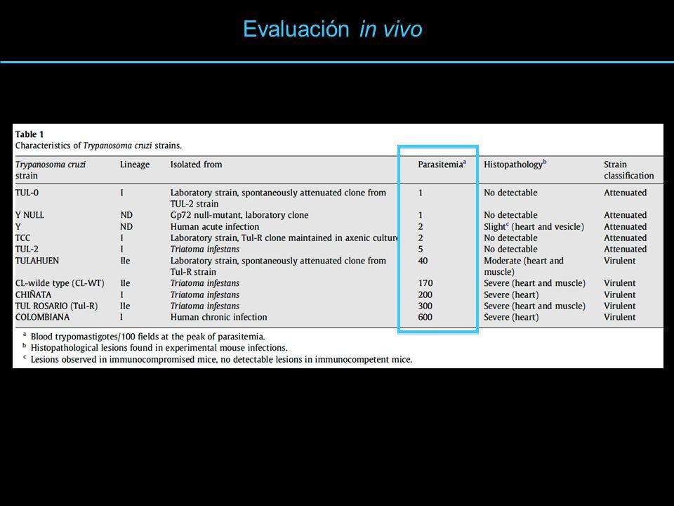 Evaluación in vivo